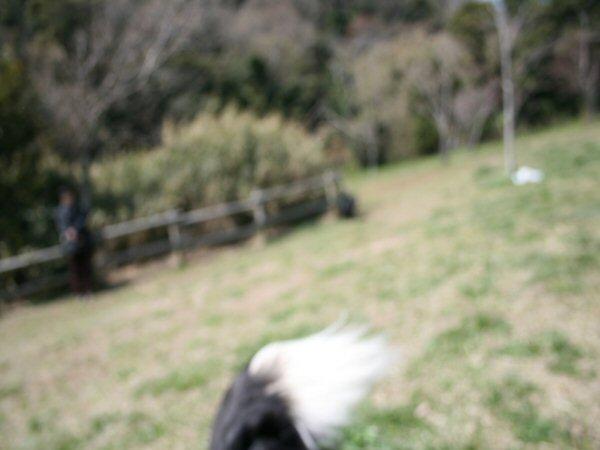 20090329フリスビー5.jpg
